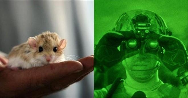 Các nhà khoa học Trung Quốc đang có thể hack mắt chuột nhìn trong đêm, sắp tới là chó và cuối cùng là người - Ảnh 6.