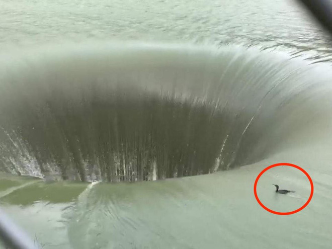Lọt thỏm xuống xoáy nước sâu 60m khi đang bơi, chú vịt nhỏ bỗng trở thành tâm điểm internet - Ảnh 2.