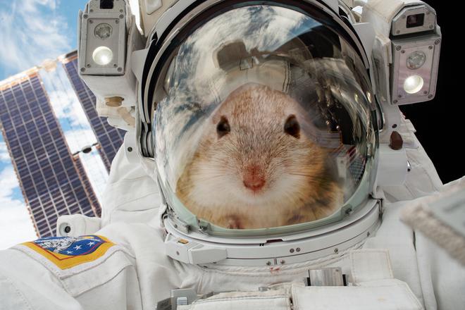 NASA mang chuột lên ISS, và chúng biến thành những con chuột bay đáng sợ thế này đây - Ảnh 3.