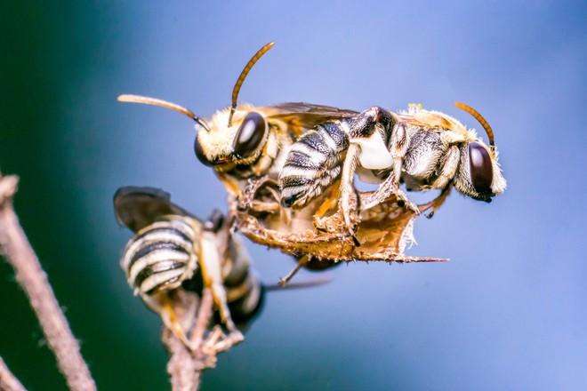 Đi khám vì đau mắt, một cô gái Đài Loan phát hiện 4 con ong đang sống trong mắt mình - Ảnh 2.
