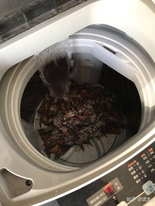 Tin mẹo rửa hải sản bằng máy giặt trên TikTok, cặp vợ chồng gây ra cái chết thương tâm cho 2,5kg tôm hùm đất - Ảnh 1.