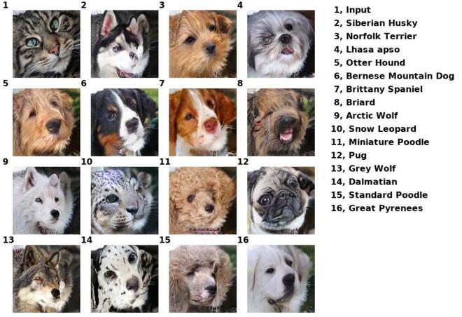 Công cụ AI tương tự deepfake của Nvidia giúp bạn hóa thành chó, mèo và nhiều con khác nữa - Ảnh 2.