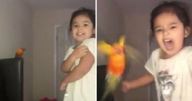 Cháu gái huấn luyện chim để tấn công bất cứ ai mình muốn thu hút 1,5 triệu likes trên Twitter - Ảnh 2.