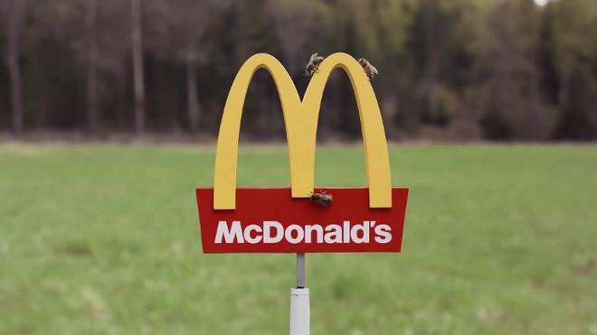 McDonalds khai trương McHive, nhà hàng tí hon dành riêng cho ong - Ảnh 2.