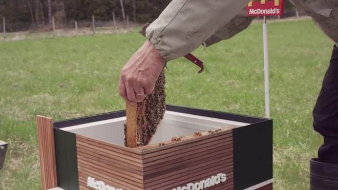 McDonalds khai trương McHive, nhà hàng tí hon dành riêng cho ong - Ảnh 12.