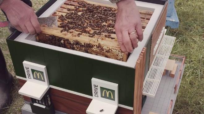 McDonalds khai trương McHive, nhà hàng tí hon dành riêng cho ong - Ảnh 13.