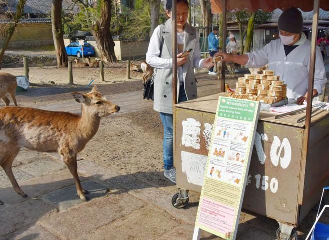 Hươu Nara nổi tiếng Nhật Bản chết đói vì ăn phải 3,2kg rác nhựa - Ảnh 5.