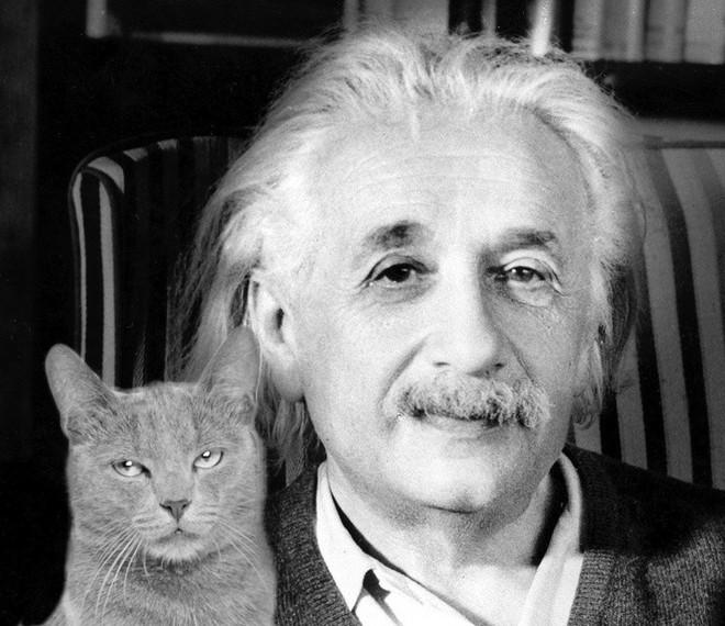 Người nuôi mèo thông minh hơn, nhưng người nuôi chó lại dễ tồn tại trong xã hội và đây là lý do - Ảnh 1.
