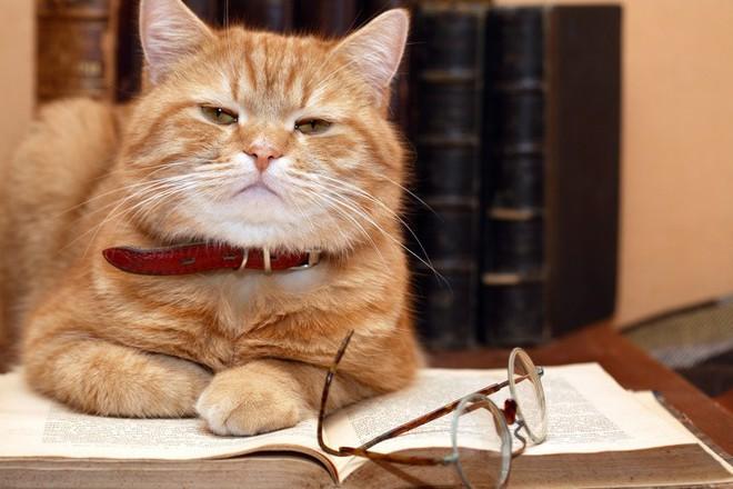 Người nuôi mèo thông minh hơn, nhưng người nuôi chó lại dễ tồn tại trong xã hội và đây là lý do - Ảnh 4.