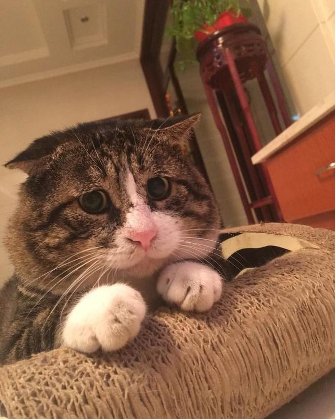 Mèo béo cơ nhỡ bỗng thành ngôi sao internet vì biểu cảm khó đỡ trong mọi khung hình - Ảnh 11.