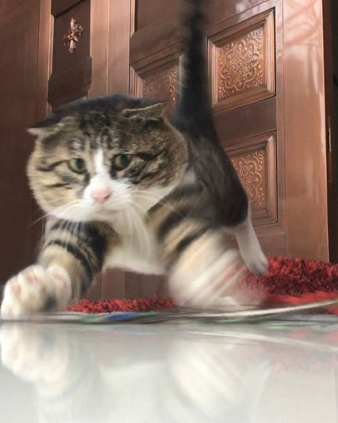 Mèo béo cơ nhỡ bỗng thành ngôi sao internet vì biểu cảm khó đỡ trong mọi khung hình - Ảnh 12.