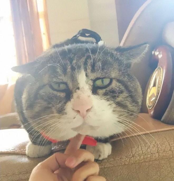 Mèo béo cơ nhỡ bỗng thành ngôi sao internet vì biểu cảm khó đỡ trong mọi khung hình - Ảnh 15.