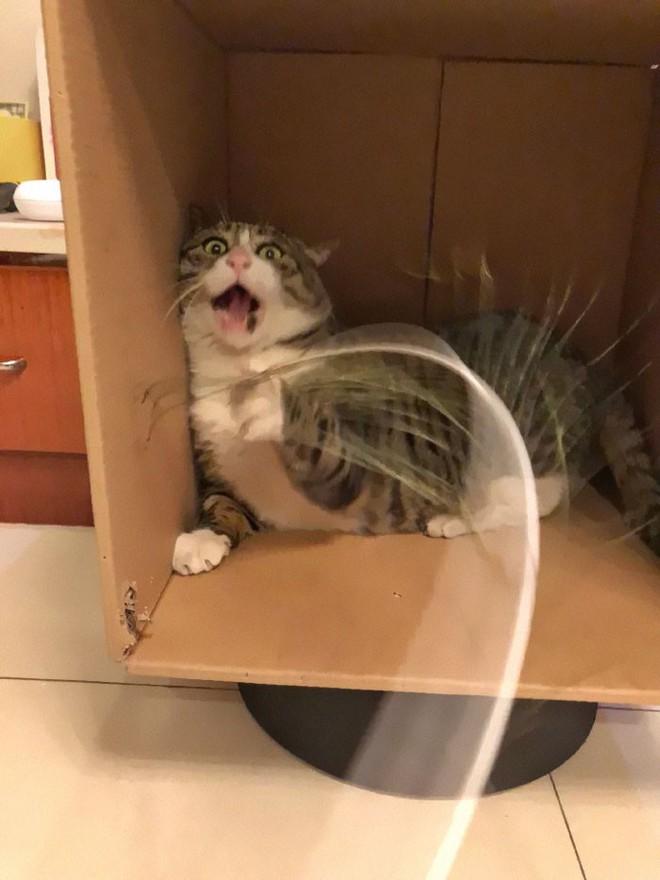 Mèo béo cơ nhỡ bỗng thành ngôi sao internet vì biểu cảm khó đỡ trong mọi khung hình - Ảnh 6.