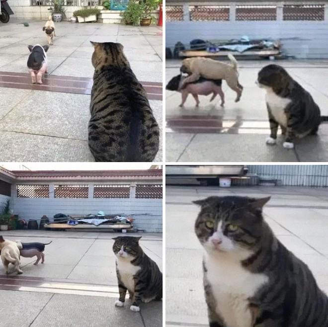 Mèo béo cơ nhỡ bỗng thành ngôi sao internet vì biểu cảm khó đỡ trong mọi khung hình - Ảnh 8.