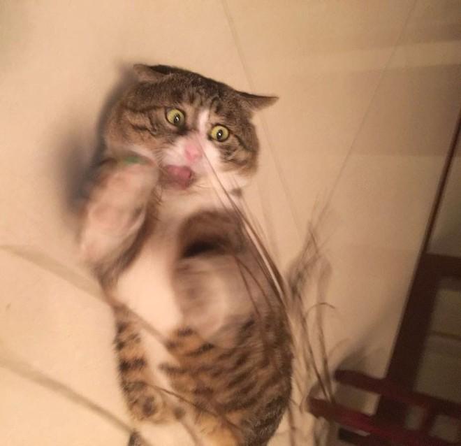 Mèo béo cơ nhỡ bỗng thành ngôi sao internet vì biểu cảm khó đỡ trong mọi khung hình - Ảnh 9.