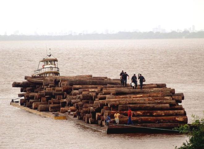 Loạt ảnh cho thấy cách con người đối xử với những cánh rừng trên thế giới tệ bạc đến mức nào - Ảnh 4.