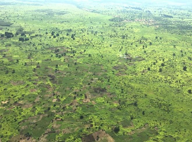 Loạt ảnh cho thấy cách con người đối xử với những cánh rừng trên thế giới tệ bạc đến mức nào - Ảnh 8.