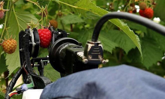 Robot nhà nông sắp thế chỗ con người để thu hoạch trái cây - Ảnh 1.