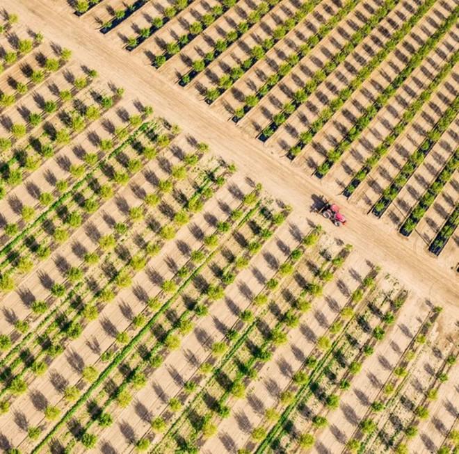 Khi những nông trại hóa thành bức ảnh nghệ thuật đẹp mê hồn dưới góc nhìn từ máy bay - Ảnh 6.