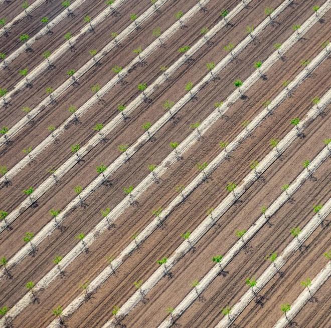 Khi những nông trại hóa thành bức ảnh nghệ thuật đẹp mê hồn dưới góc nhìn từ máy bay - Ảnh 7.