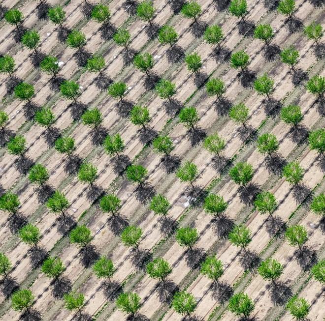 Khi những nông trại hóa thành bức ảnh nghệ thuật đẹp mê hồn dưới góc nhìn từ máy bay - Ảnh 9.