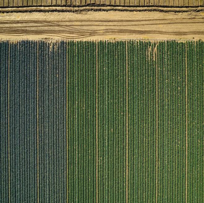 Khi những nông trại hóa thành bức ảnh nghệ thuật đẹp mê hồn dưới góc nhìn từ máy bay - Ảnh 12.