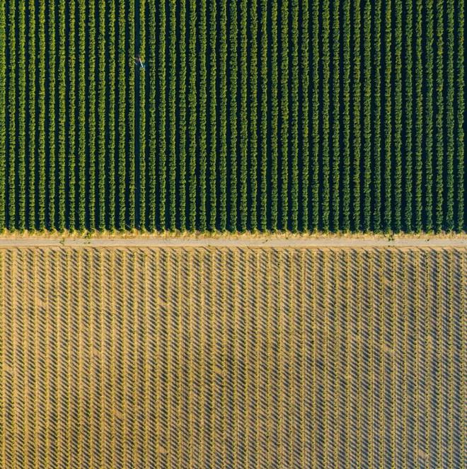 Khi những nông trại hóa thành bức ảnh nghệ thuật đẹp mê hồn dưới góc nhìn từ máy bay - Ảnh 11.