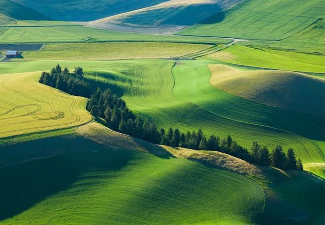 Khi những nông trại hóa thành bức ảnh nghệ thuật đẹp mê hồn dưới góc nhìn từ máy bay - Ảnh 5.