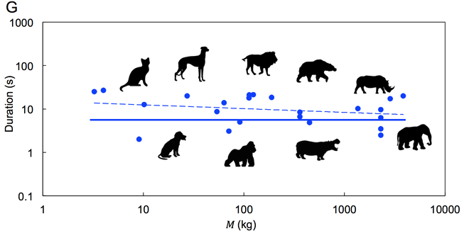 To như voi hay nhỏ như mèo, tất cả động vật đều đại tiện trong 12 giây: Tại sao lại có nghịch lý vậy? - Ảnh 4.