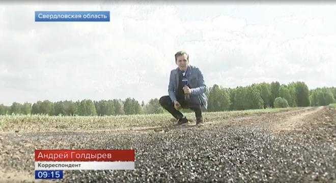 Dùng hàng tấn lòng mề và phân gà để bón cây, nông dân Nga biến dãy núi Ural thành địa ngục ruồi - Ảnh 1.