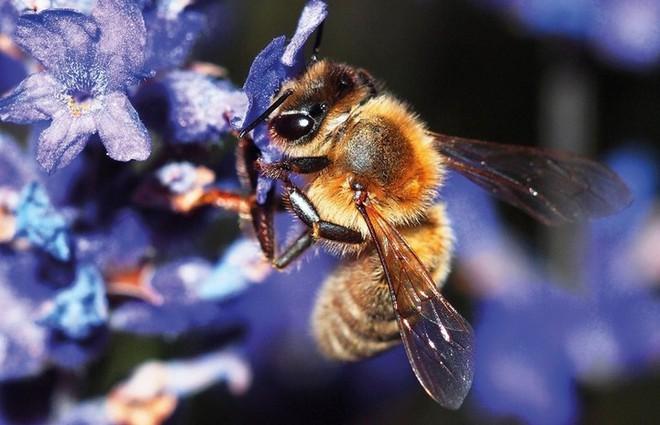 Hệ lụy gì đằng sau hiện tượng nhiều loài ong hoang dã bắt đầu sử dụng nhựa làm vật liệu xây tổ - Ảnh 3.