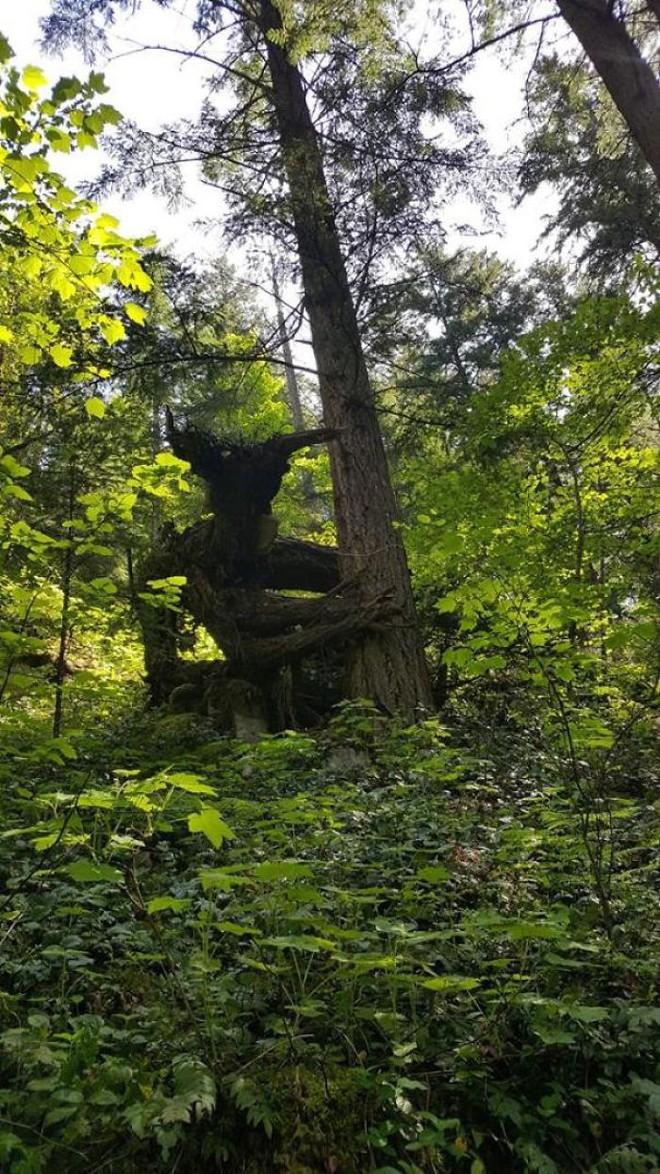 22 thứ kỳ lạ được dân tình phát hiện trong rừng, phải khoe ngay với internet thì mới chịu được - Ảnh 8.