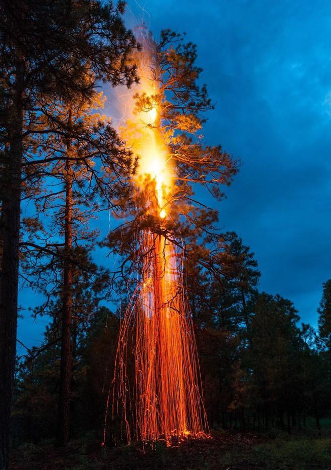 22 thứ kỳ lạ được dân tình phát hiện trong rừng, phải khoe ngay với internet thì mới chịu được - Ảnh 10.
