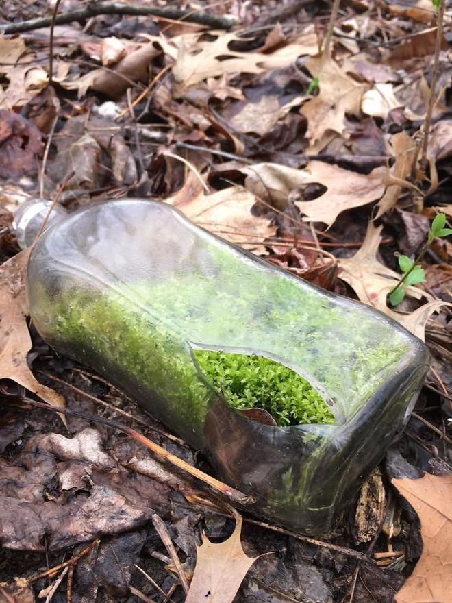 22 thứ kỳ lạ được dân tình phát hiện trong rừng, phải khoe ngay với internet thì mới chịu được - Ảnh 17.