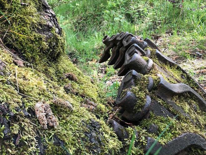 22 thứ kỳ lạ được dân tình phát hiện trong rừng, phải khoe ngay với internet thì mới chịu được - Ảnh 22.