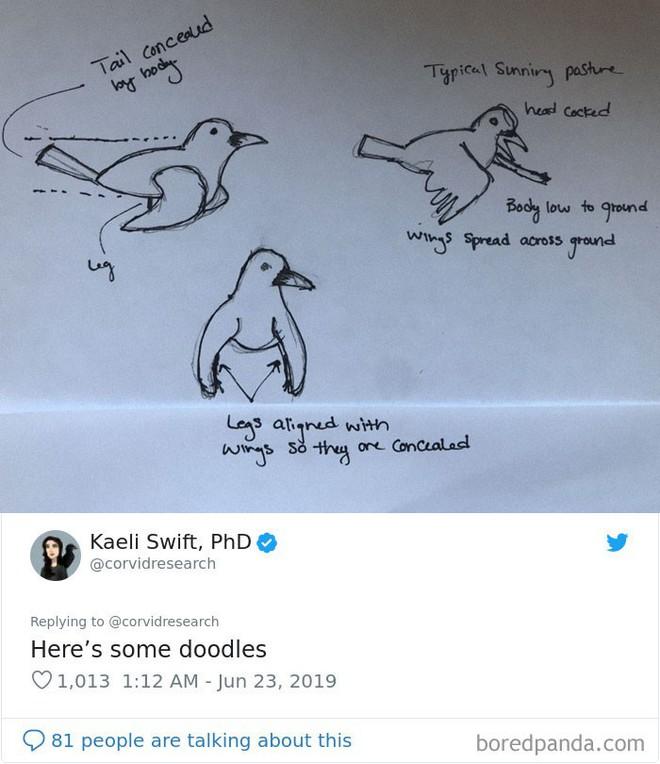 Con quạ ngồi xổm như khỉ đột khiến internet hoang mang, chuyên gia chim liền có câu trả lời - Ảnh 8.
