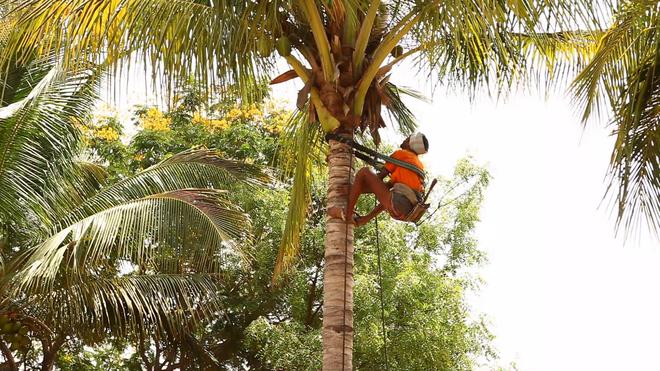 Ngả mũ thán phục chiếc xe máy leo dừa của bác nông dân Ấn Độ - Ảnh 1.