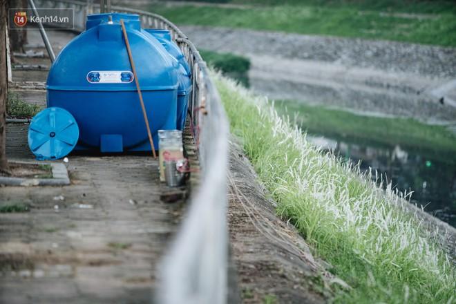 Sông Tô Lịch đổi màu sau khi làm sạch bằng công nghệ Nhật Bản: Hoa lau xanh mướt, người dân thư thả câu cá - Ảnh 5.