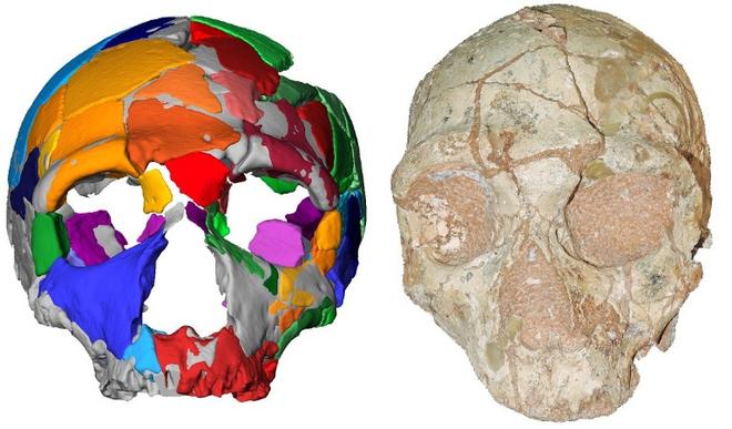 Phát hiện hóa thạch của nhóm người tiền sử đầu tiên rời khỏi Châu Phi - Ảnh 3.