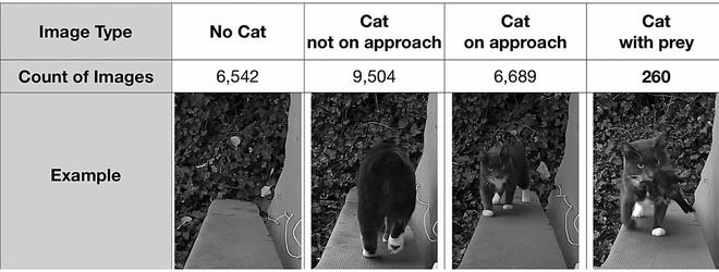 Chán cảnh mèo tha động vật chết về nhà, kỹ sư Amazon chế cửa mèo chui điều khiển bằng... AI - Ảnh 2.