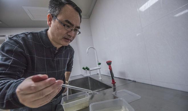Thả 200 triệu con muỗi thí nghiệm vào tự nhiên, Trung Quốc quét sạch muỗi vằn trên 2 hòn đảo - Ảnh 4.