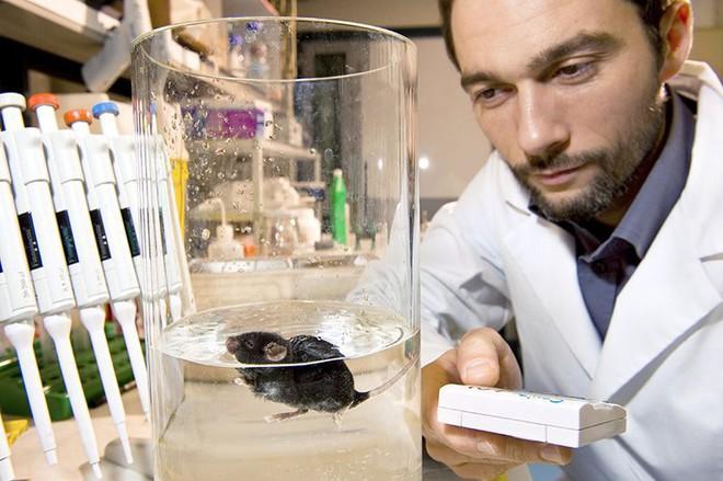 Bơi đến kiệt sức trong ống nghiệm: Những con chuột đang hi sinh giúp con người nghiên cứu bệnh trầm cảm - Ảnh 2.