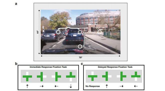 Ánh mắt là thứ khiến bạn mất tập trung khi lái xe, không phải não bộ - Ảnh 2.