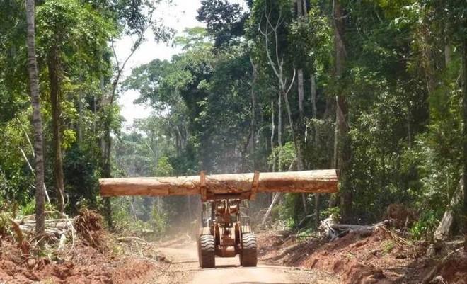 Cánh rừng lớn thứ hai thế giới đang nhả lượng CO2 tích trữ cả ngàn năm ra môi trường và nguyên nhân do phá rừng - Ảnh 1.
