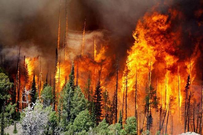 Cánh rừng lớn thứ hai thế giới đang nhả lượng CO2 tích trữ cả ngàn năm ra môi trường và nguyên nhân do phá rừng - Ảnh 2.
