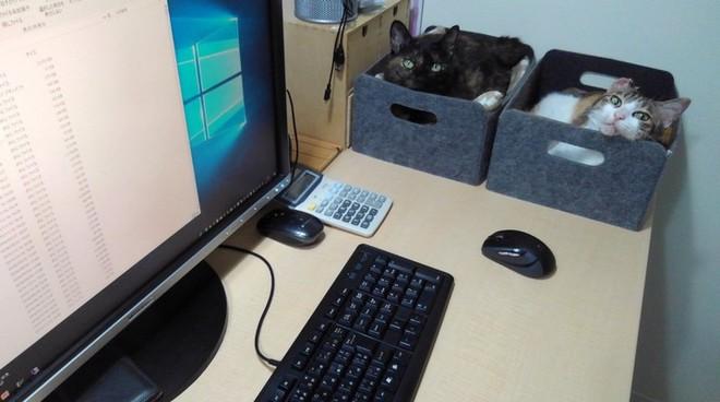 Chuyện lạ: Công ty công nghệ Nhật Bản này trích hẳn một khoản bồi dưỡng tiền nuôi mèo cho nhân viên - Ảnh 3.
