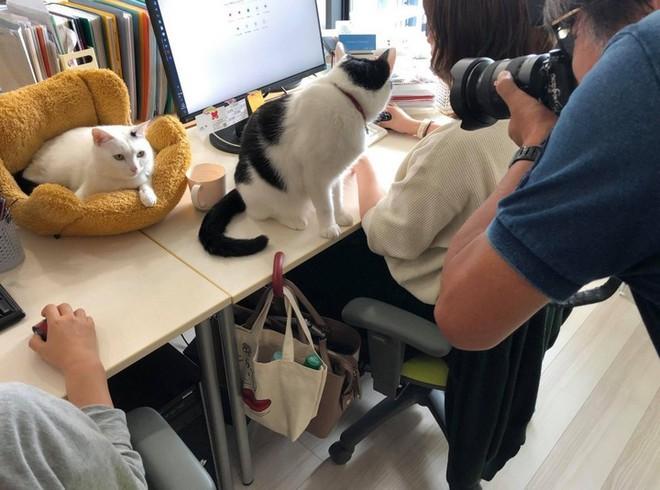 Chuyện lạ: Công ty công nghệ Nhật Bản này trích hẳn một khoản bồi dưỡng tiền nuôi mèo cho nhân viên - Ảnh 1.