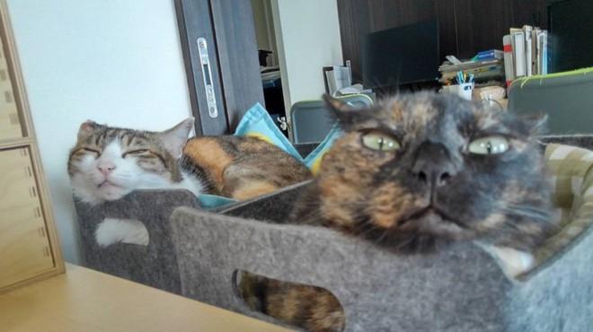Chuyện lạ: Công ty công nghệ Nhật Bản này trích hẳn một khoản bồi dưỡng tiền nuôi mèo cho nhân viên - Ảnh 2.