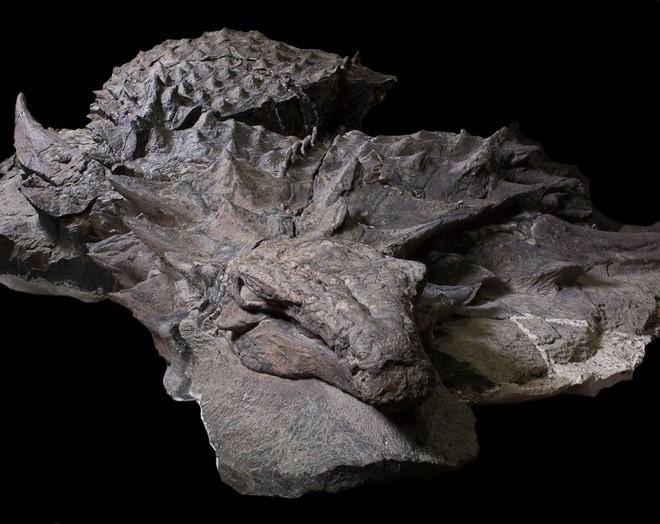 Xác ướp khủng long được bảo quản nguyên vẹn hơn 100 triệu năm có trọng lượng gần như tương tự lúc còn sống - Ảnh 2.