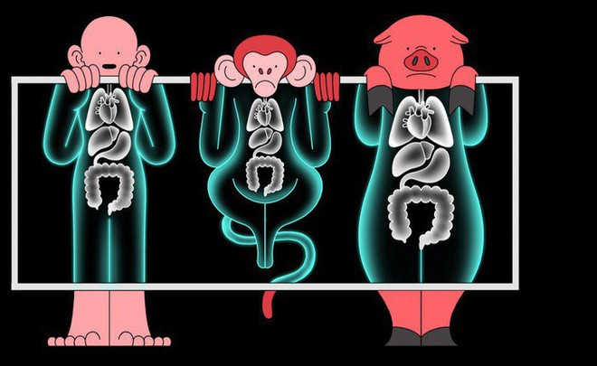 Trung Quốc lại gây tranh cãi khi tạo ra phôi thai nửa người nửa khỉ - Ảnh 2.